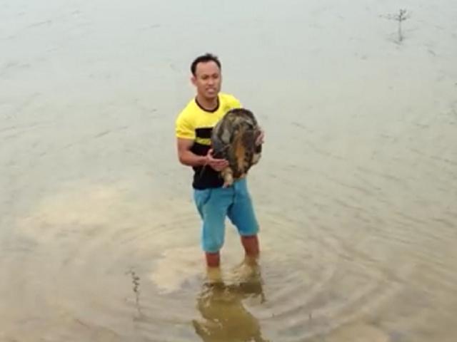 Cụ rùa trăm tuổi, nặng gần 14kg đi lạc vào nhà dân - 3