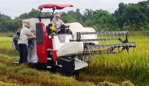 Côn đồ vác hung khí, cưỡng đoạt tiền chủ máy gặt lúa - 1