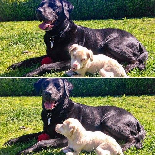 Chú chó răng vẩu nổi tiếng khắp thế giới với nụ cười lạ - 6