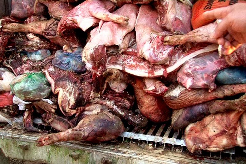 Mua 10 tấn thịt lợn chết thối mang bán kiếm lời - 1