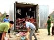Mua 10 tấn thịt lợn chết thối mang bán kiếm lời