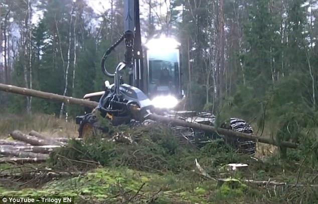 """Máy chặt cây """"xơi tái"""" cây gỗ chục mét trong vài giây - 2"""