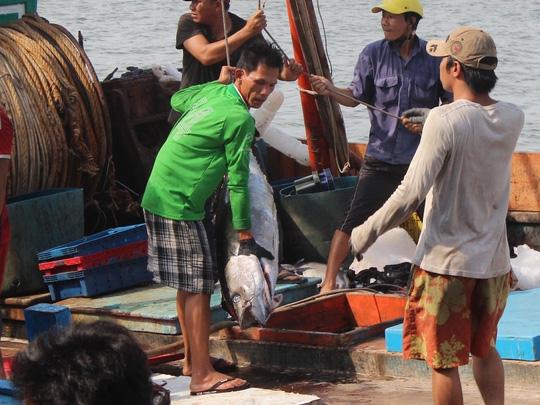 Trúng đậm cá ngừ trái vụ, ngư dân vượt gió vươn khơi - 4