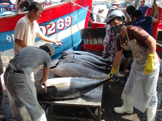 Trúng đậm cá ngừ trái vụ, ngư dân vượt gió vươn khơi - 5