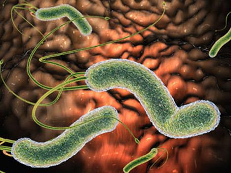 Viêm hang vị: Lý do tiềm ẩn khiến vi khuẩn HP khó diệt - 1