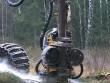 """Máy chặt cây """"xơi tái"""" cây gỗ chục mét trong vài giây"""