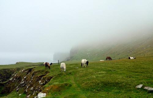 Khám phá xứ sở của những chú ngựa chân ngắn dễ thương - 4