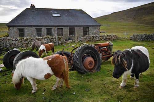 Khám phá xứ sở của những chú ngựa chân ngắn dễ thương - 7
