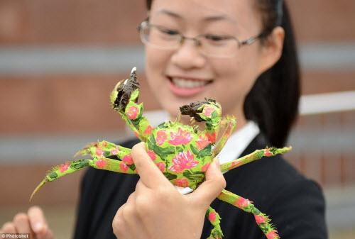 Độc đáo cuộc thi thời trang cua ở Trung Quốc - 1