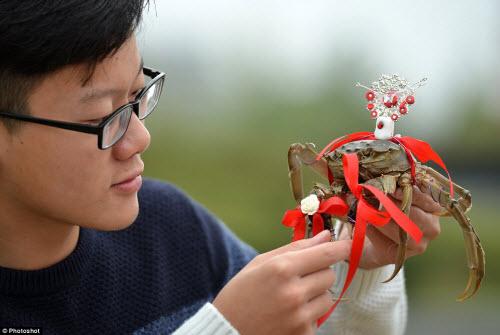 Độc đáo cuộc thi thời trang cua ở Trung Quốc - 2
