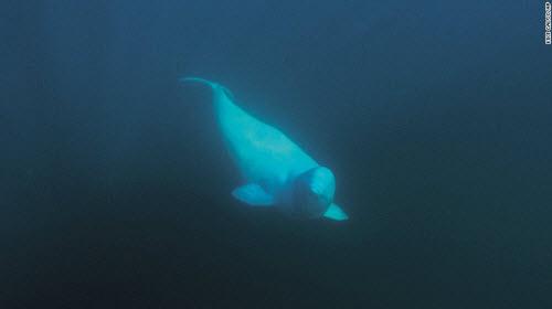 Những địa điểm bơi lặn lạ lùng nhất thế giới - 4