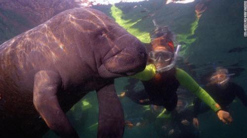 Những địa điểm bơi lặn lạ lùng nhất thế giới - 6