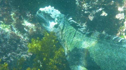 Những địa điểm bơi lặn lạ lùng nhất thế giới - 7