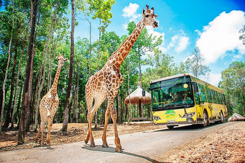 4 cung bậc cảm xúc tại vườn thú mở đầu tiên và duy nhất của Việt Nam - 1