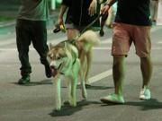 Tin tức trong ngày - Hết hồn cảnh chó thả rông dọa cắn người ở phố đi bộ HN