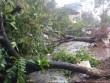 Hà Nội ra công điện khẩn ứng phó siêu bão Sarika