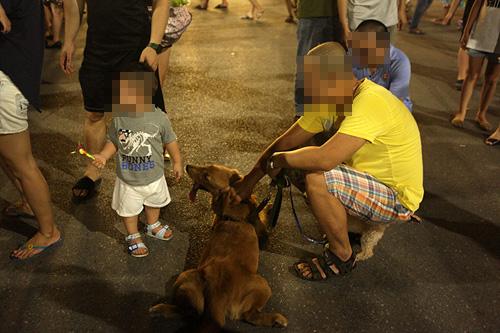 Hết hồn cảnh chó thả rông dọa cắn người ở phố đi bộ HN - 3