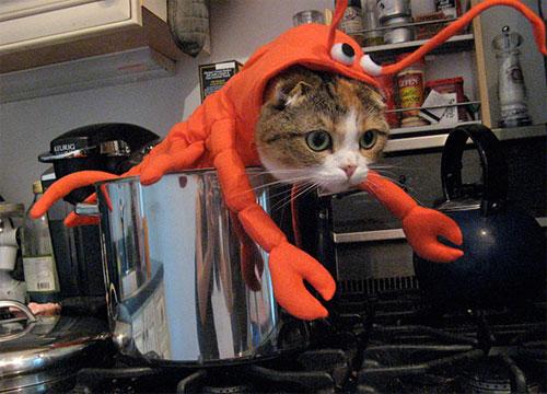 Chọn đồ cho các bé mèo đi chơi hội Halloween - 1