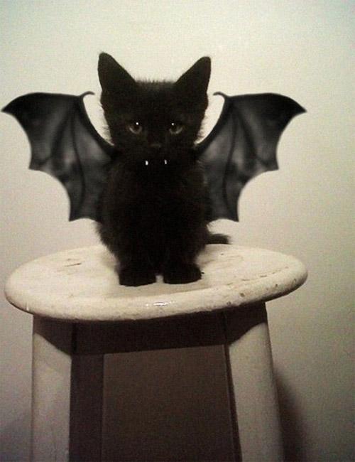 Chọn đồ cho các bé mèo đi chơi hội Halloween - 2