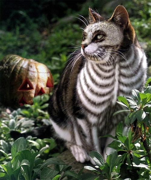 Chọn đồ cho các bé mèo đi chơi hội Halloween - 3