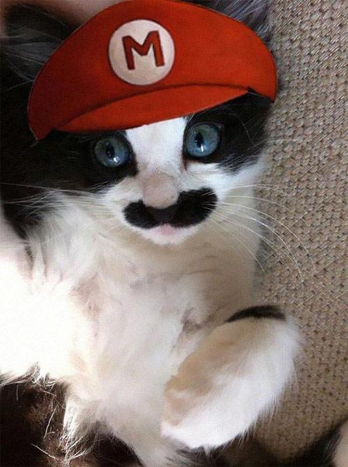 Chọn đồ cho các bé mèo đi chơi hội Halloween - 4