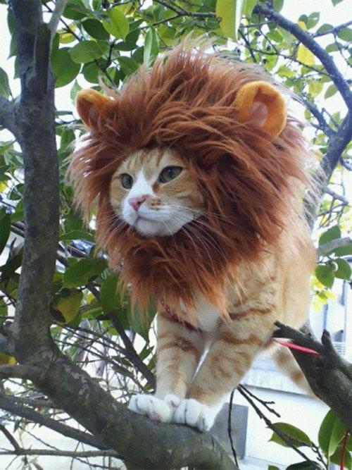 Chọn đồ cho các bé mèo đi chơi hội Halloween - 6