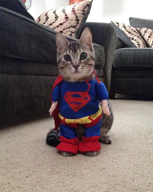 Chọn đồ cho các bé mèo đi chơi hội Halloween - 7