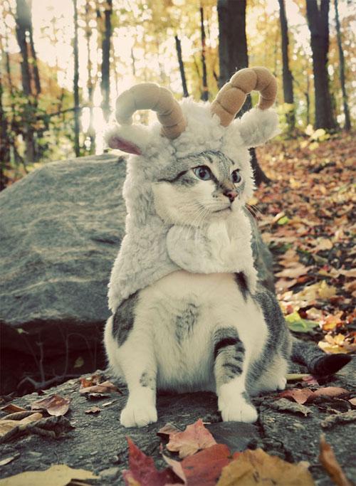 Chọn đồ cho các bé mèo đi chơi hội Halloween - 8