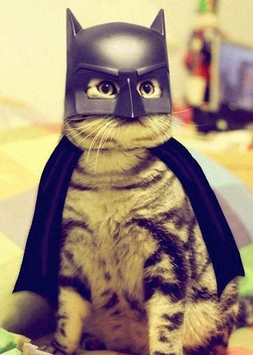 Chọn đồ cho các bé mèo đi chơi hội Halloween - 10
