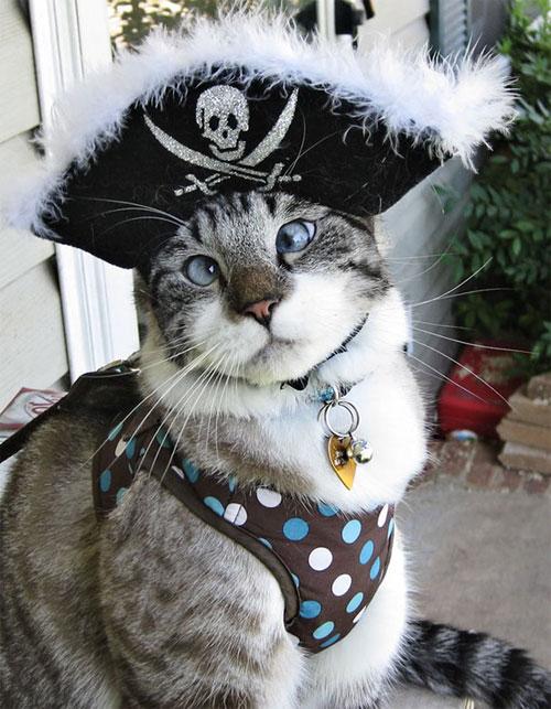 Chọn đồ cho các bé mèo đi chơi hội Halloween - 11