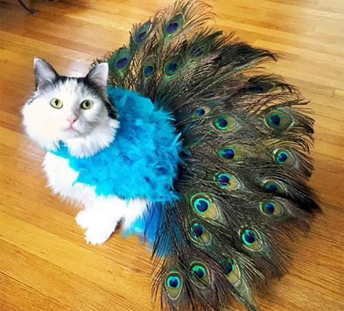 Chọn đồ cho các bé mèo đi chơi hội Halloween - 12