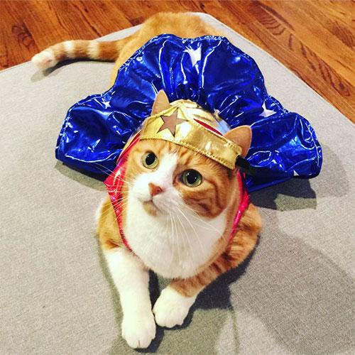 Chọn đồ cho các bé mèo đi chơi hội Halloween - 13