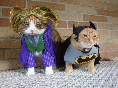 Chọn đồ cho các bé mèo đi chơi hội Halloween - 14