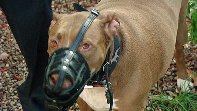 Dắt chó đi dạo không rọ mõm: Ở Anh phạt tới 70 triệu - 3