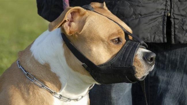 Dắt chó đi dạo không rọ mõm: Ở Anh phạt tới 70 triệu - 4