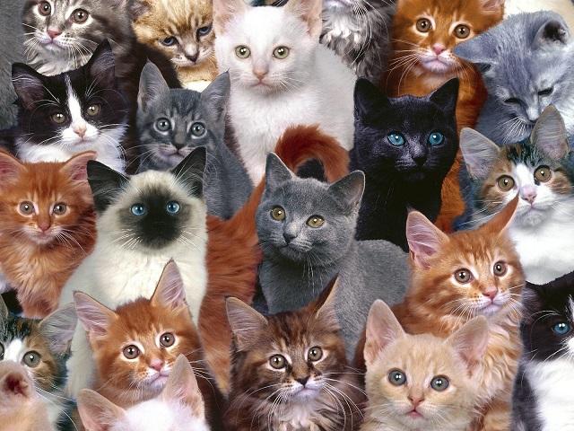 Mỹ: Hoảng hốt phát hiện xác 40 con mèo trong tủ lạnh - 1