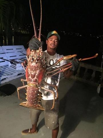 Mỹ: Bắt được tôm hùm khổng lồ 40 tuổi nặng 6kg - 2