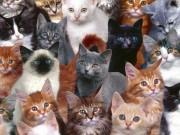 Phi thường - kỳ quặc - Mỹ: Hoảng hốt phát hiện xác 40 con mèo trong tủ lạnh