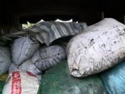 """Thị trường - Tiêu dùng - Phục kích 9 tấn mỡ bốc mùi """"chui"""" về Hà Nội"""