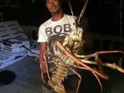 Phi thường - kỳ quặc - Mỹ: Bắt được tôm hùm khổng lồ 40 tuổi nặng 6kg