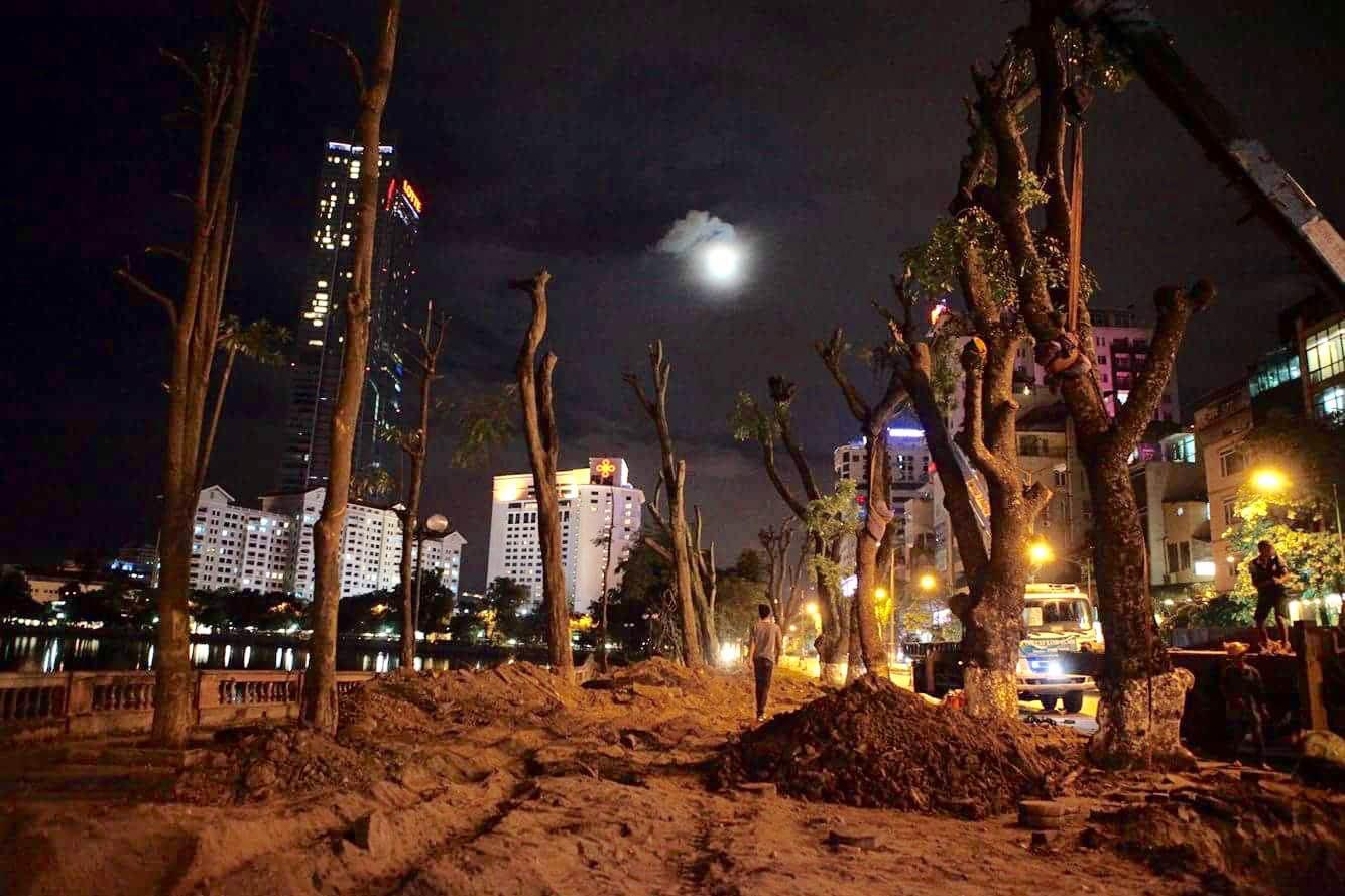 """Trắng đêm bứng gốc, di dời """"cụ cây"""" trên đường Kim Mã - 1"""