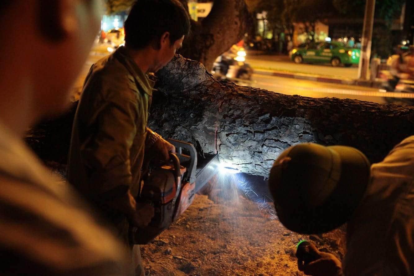 """Trắng đêm bứng gốc, di dời """"cụ cây"""" trên đường Kim Mã - 5"""