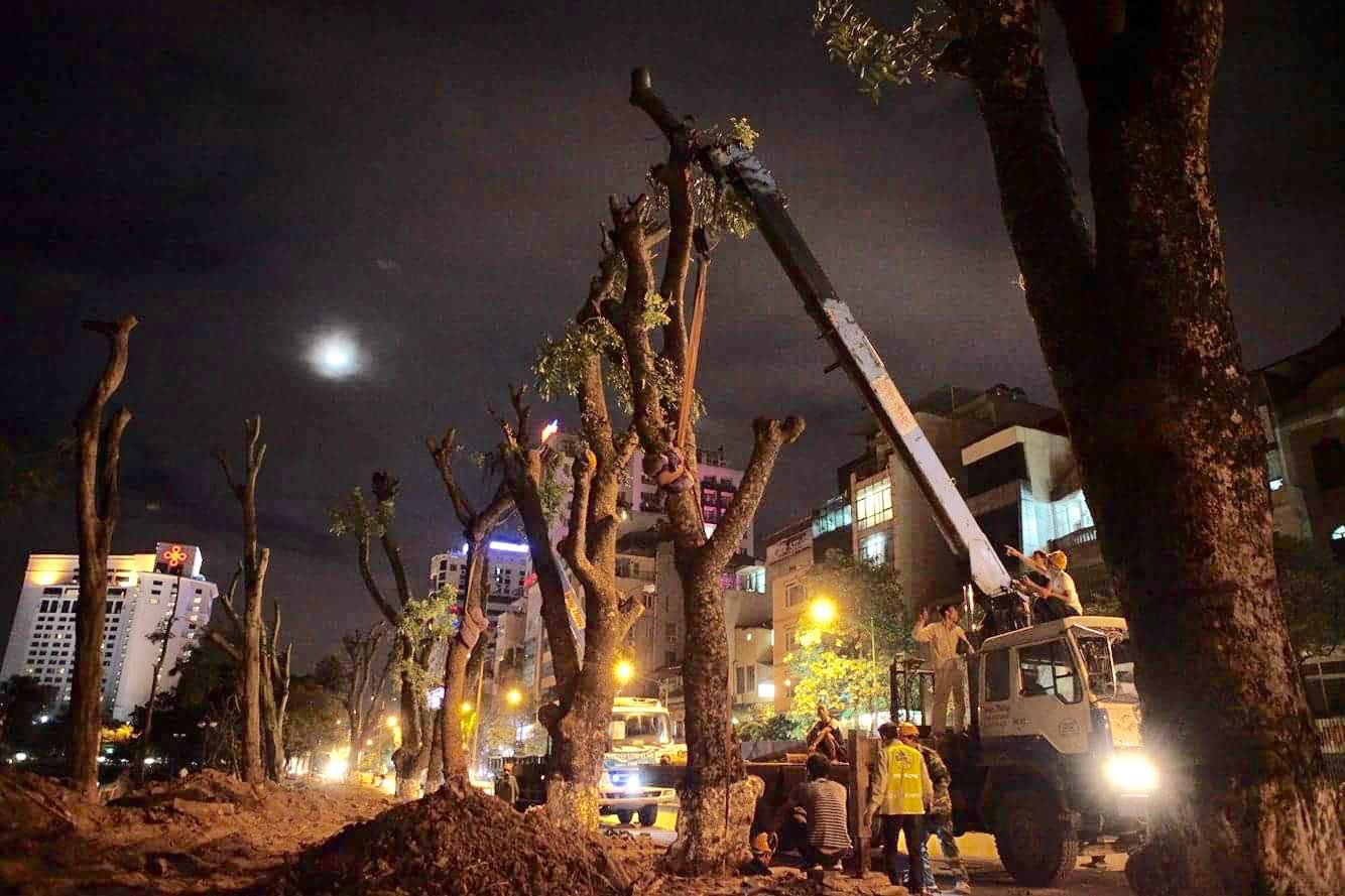 """Trắng đêm bứng gốc, di dời """"cụ cây"""" trên đường Kim Mã - 10"""