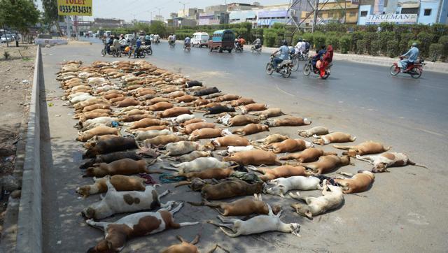Lo cho dân, Pakistan giết hơn 1.000 con chó - 1