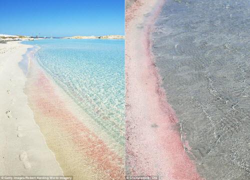 Những bãi biển màu hồng đẹp như mơ khắp thế giới - 5