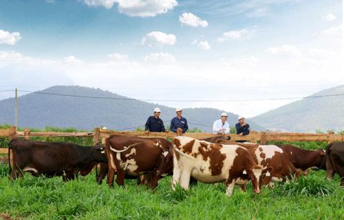 Trang trại bò sữa Organic chuẩn Châu Âu đầu tiên tại Việt Nam của Vinamilk - 3