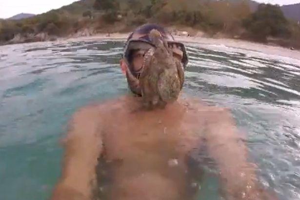 Bạch tuộc lao vào mặt thợ lặn, bám chặt quyết không rời - 2