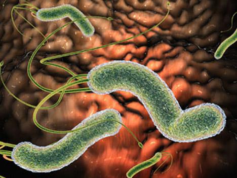"""Viêm hang vị: 3 lý do khiến vi khuẩn HP """"thách thức"""" với kháng sinh - 1"""