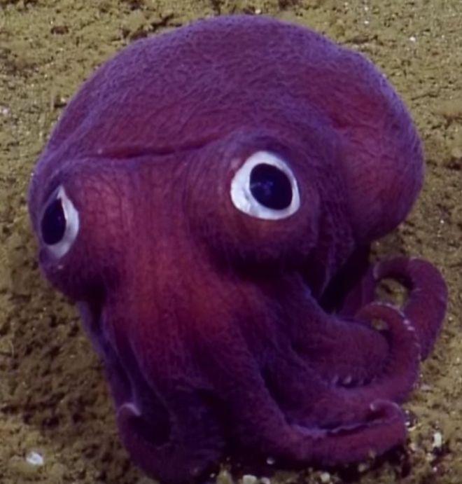 Những sinh vật màu tím kì lạ dưới đáy Thái Bình Dương - 2