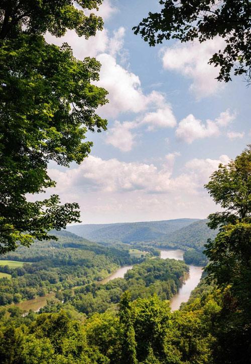 Khu rừng bí mật đẹp mê hồn trong lòng nước Mỹ - 6